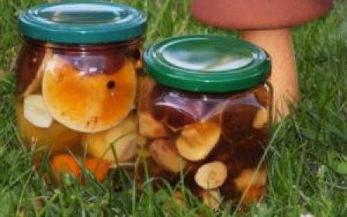 Как мариновать рыжики на зиму – простые рецепты грибов в банках