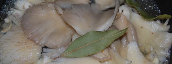 Как готовить вешенки маринованные быстро и вкусно: как правильно замариновать (рецепт быстрого приготовления в домашних условиях)
