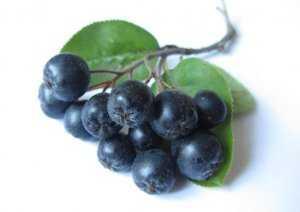 Сироп черноплодная рябина с вишневым листом рецепты