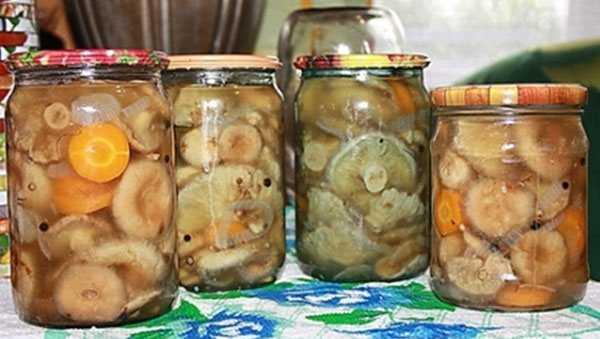 Как замариновать волнушки. рецепты маринованных волнушек