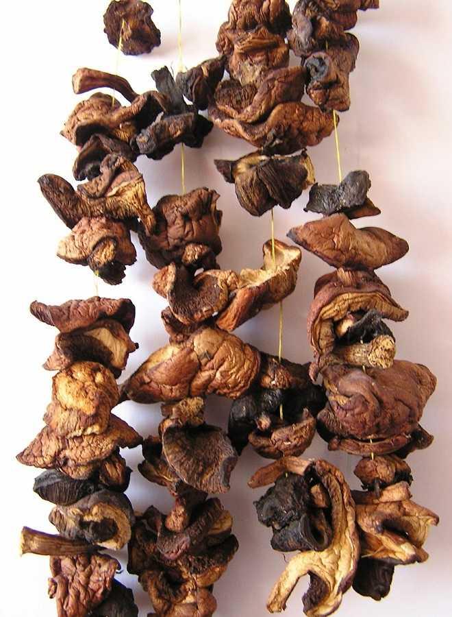 Как долго можно хранить отварные грибы в холодильнике