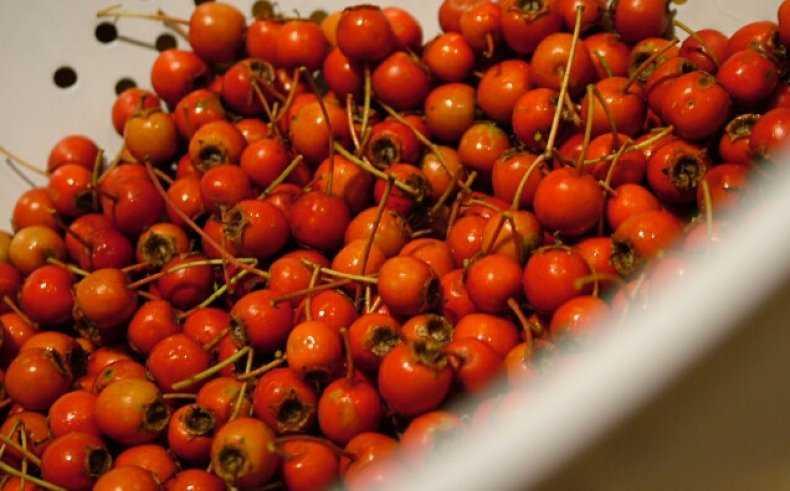 В каком месяце можно собирать урожай с дерева: на урале, в сибири и средней полосе россии - сад и огород