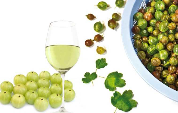 Как сделать вино из крыжовника в домашних условиях. пошаговые рецепты домашнего вина из крыжовника. как сделать вино из крыжовника в домашних условиях - рецепты приготовления