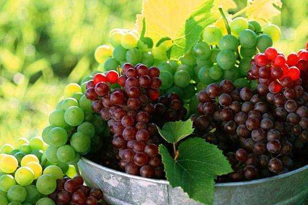 Домашнее вино из винограда с перчаткой – выход из положения! технология изготовления домашнего вина из винограда с перчаткой - автор екатерина данилова - журнал женское мнение