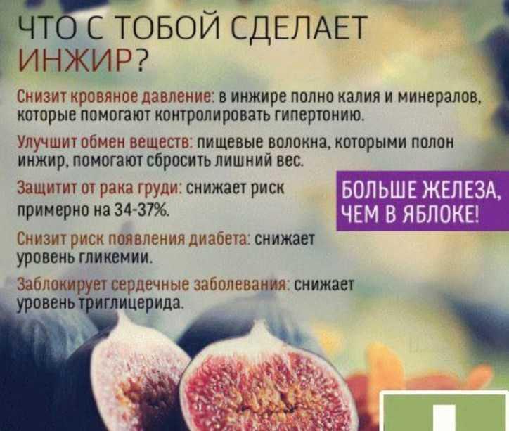 Инжир: калорийность и баланс бжу свежего, сушеного и вяленого фрукта