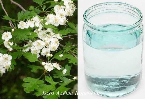 Настойка из шиповника на водке полезные свойства