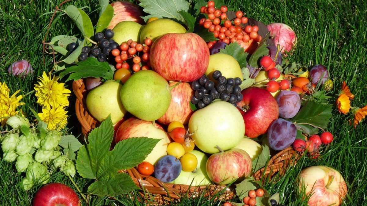 Польза компота из тутовника, рецепты с цитрусовыми, другими ягодами и фруктами, сроки и условия хранения. Рецепты на зиму для длительного хранения.