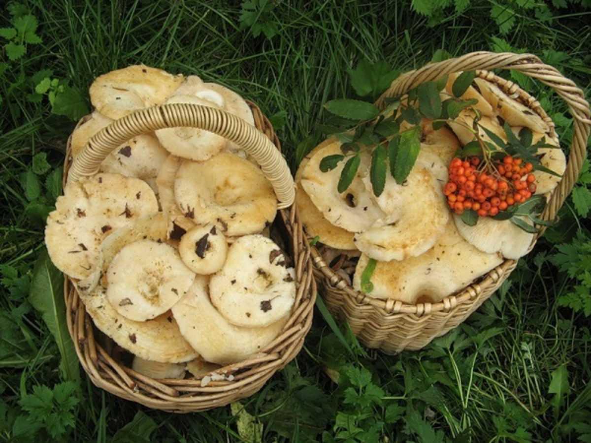 Вареники с грибами: пошаговый рецепт приготовления в домашних условиях