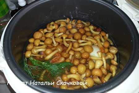 Грибной суп из маслят - аромат сказочного леса: рецепт с фото и видео