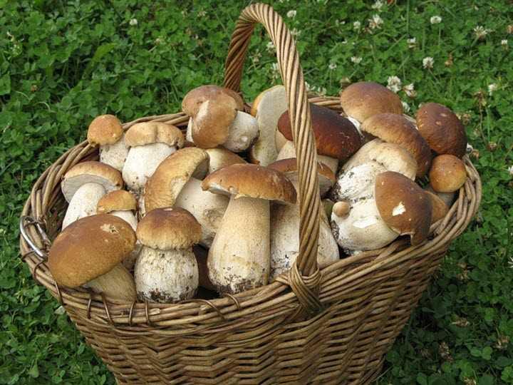 Как и сколько варить сушеные грибы? | infoeda.com