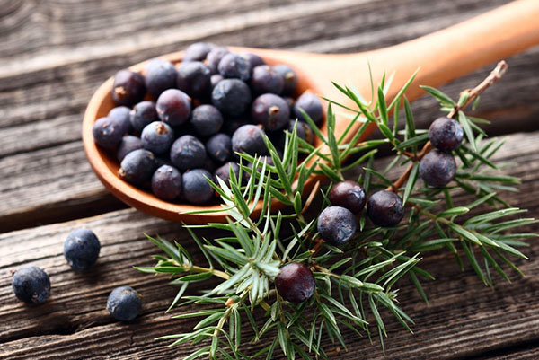 Настойка из можжевельника на самогоне: советы по выбору ягод, свойства и пошаговое приготовление напитка в домашних условиях