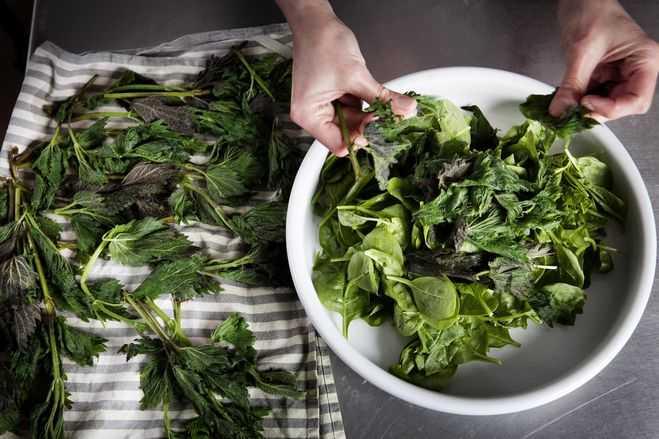 Салат из крапивы, рецепты: польза и вред, с яйцом, с одуванчиком, способы приготовления