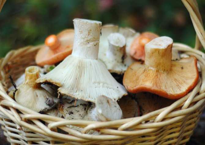 Как приготовить вареники с картошкой и грибами: пошаговые рецепты