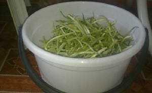 Черемша (свежая, маринованная): польза и вред для здоровья