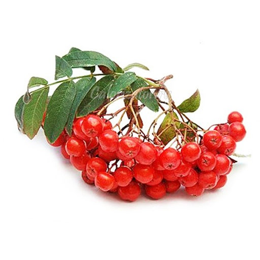 Варенье из красной рябины: простой рецепт и 16 способов приготовления на зиму в домашних условиях