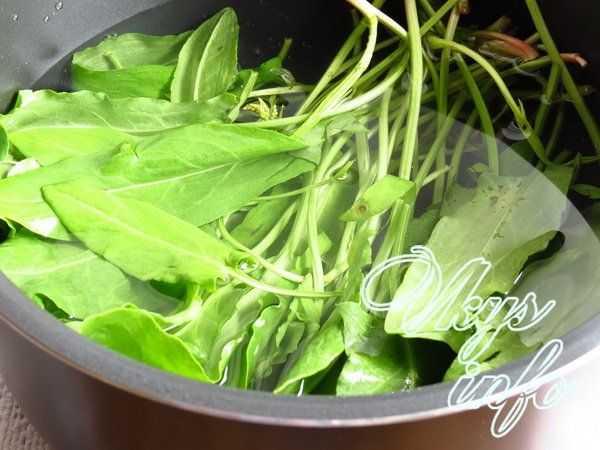 Растение с приятной кислинкой — щавель. как заморозить и использовать продукт?