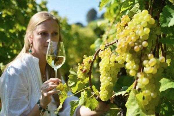 Готовим домашнее вино из винограда по лучшему простому рецепту