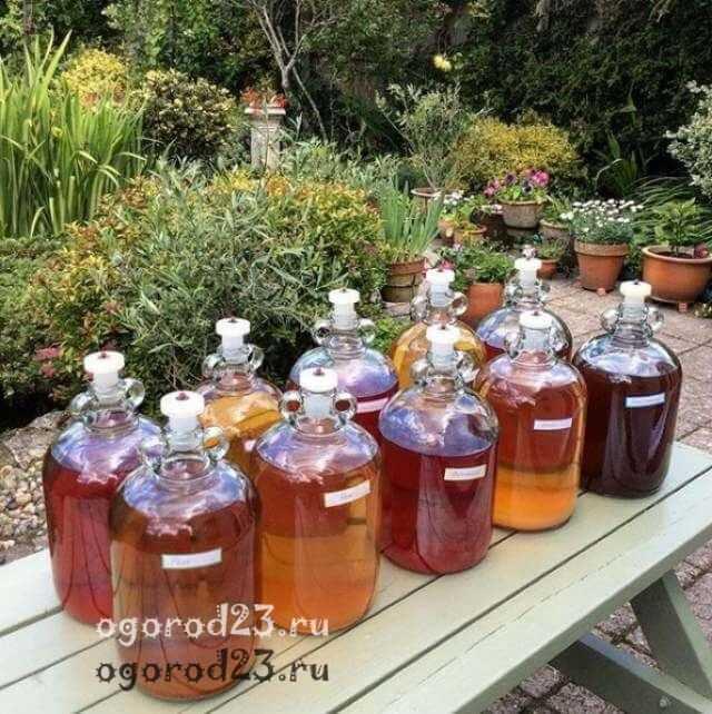 Вкусовые и качественные особенности плодового сырья для домашнего вина из крыжовника. технология вина из крыжовника в рецептах от профи