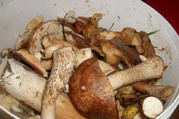 Как хранить соленые грибы в домашних условиях. тонкости и хитрости гранения солёных грибов: закатанных в банки или без закатки - womens-24