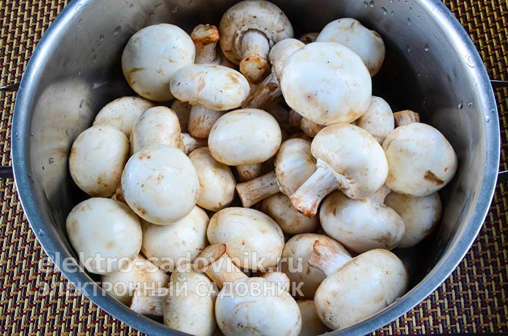 Грибная икра на зиму — самые вкусные рецепты приготовления икры из грибов