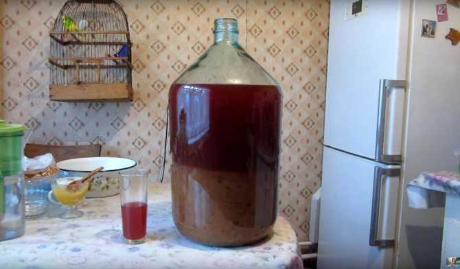 Сливовица: история и рецепты напитка   food and health