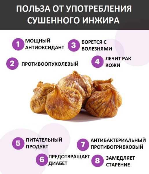 Инжир сушеный - польза и вред. лечебные свойства сушеного инжира, как правильно есть и противопоказания