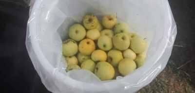 Моченые яблоки и капуста рецепт с фото - 1000.menu
