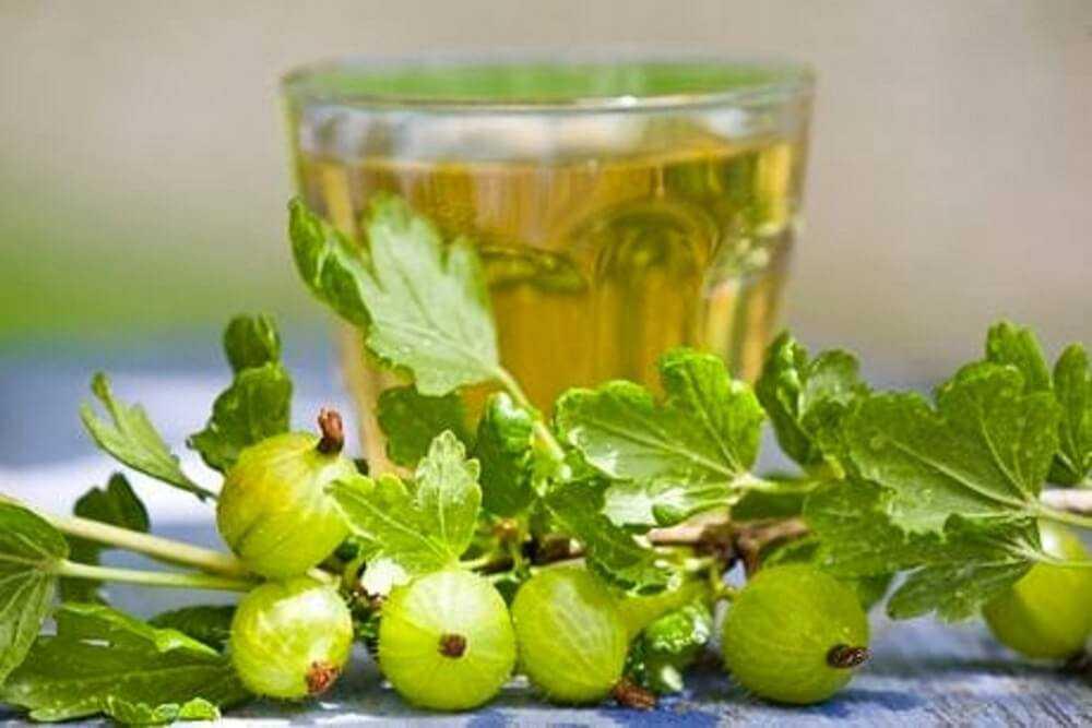 Как приготовить вино из крыжовника в домашних условиях: рецепты приготовления напитка, польза и вред