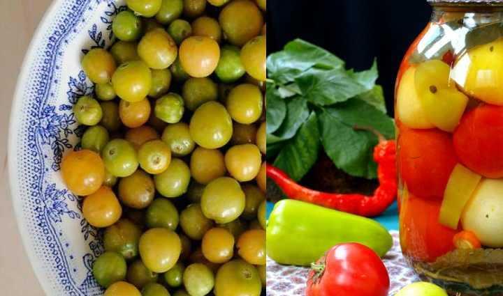 Физалис: рецепты приготовления на зиму, консервирование из мексиканских и ягодных съедобных сортов