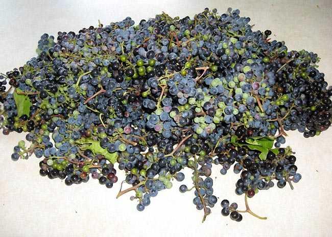 Чача из жмыха винограда в домашних условиях