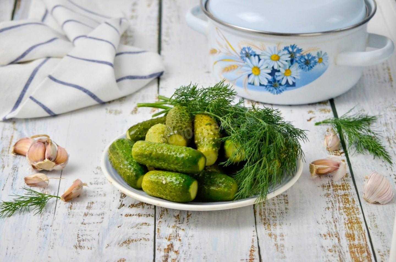 Готовим малосольные огурцы в пакете с зеленью укропа и чесноком — удобно, быстро, вкусно