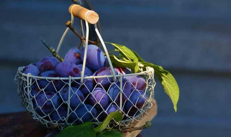 Сливовица: виды, рецепт приготовления в домашних условиях