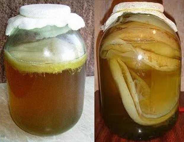 Чайный гриб — википедия. что такое чайный гриб