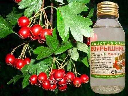 Настойка из цветов боярышника. рецепт на водке, на спирту, как приготовить в домашних условиях