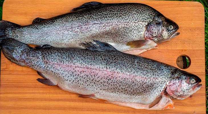 Как правильно коптить рыбу?