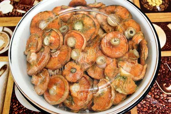 Блюда из рыжиков с картошкой: рецепты русской кухни