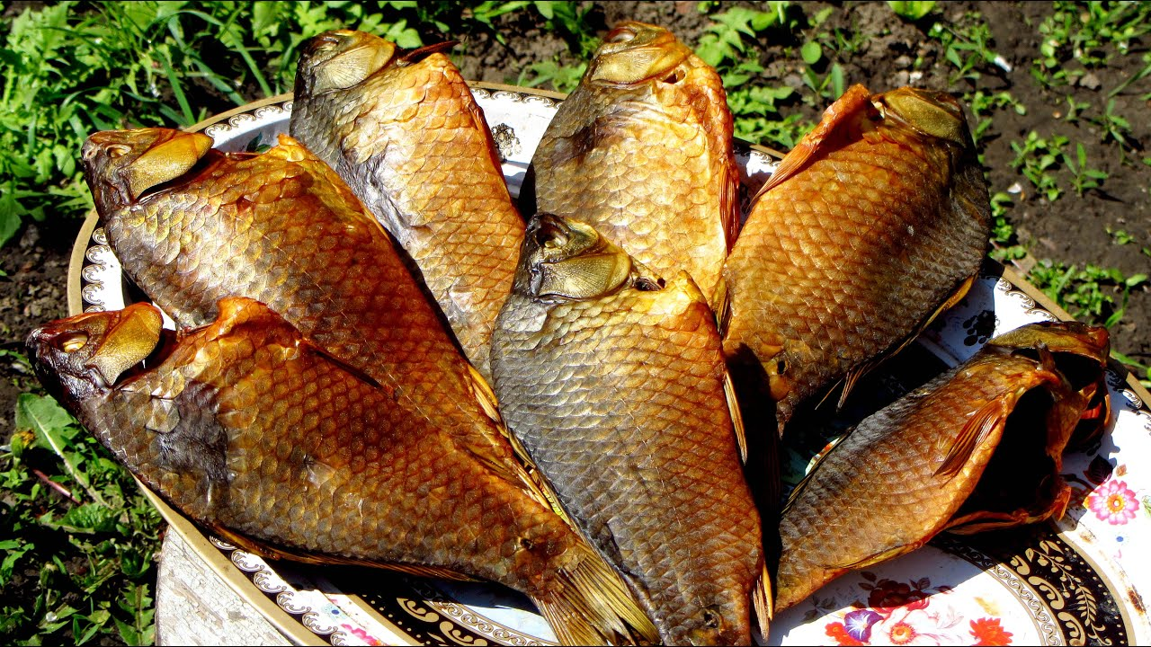 Судак горячего копчения: польза и калорийность, правила подготовки и засолки рыбы. Рецепты деликатеса в коптильне, на гриле в домашних условиях.