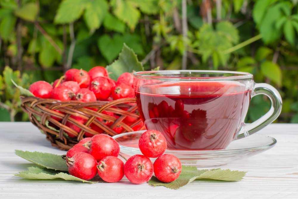 Сушеный боярышник: польза, вред и применение | food and health