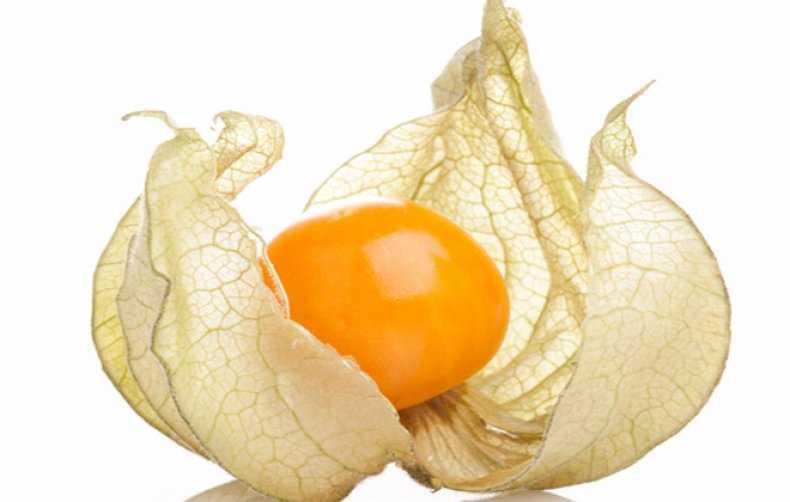 Физалис – оранжевое чудо на даче