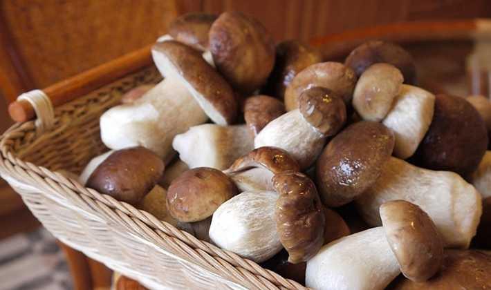 Правильная сушка грибов в домашних условиях