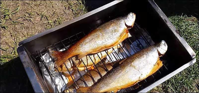 Кета горячего, холодного копчения: польза, калорийность. Подготовка рыбы, пошаговое описание рецептов. Сколько понадобится времени и как хранить готовый продукт.