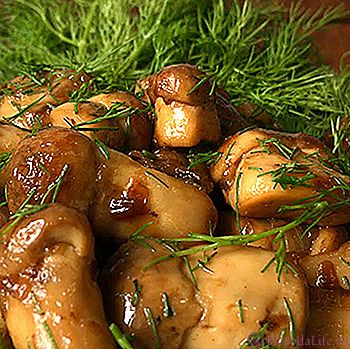 Маринованные волнушки: рецепты приготовления на зиму