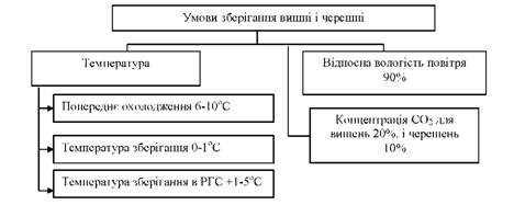 Срок и условия хранения компота (из вишни, с косточками, сухофруктов)