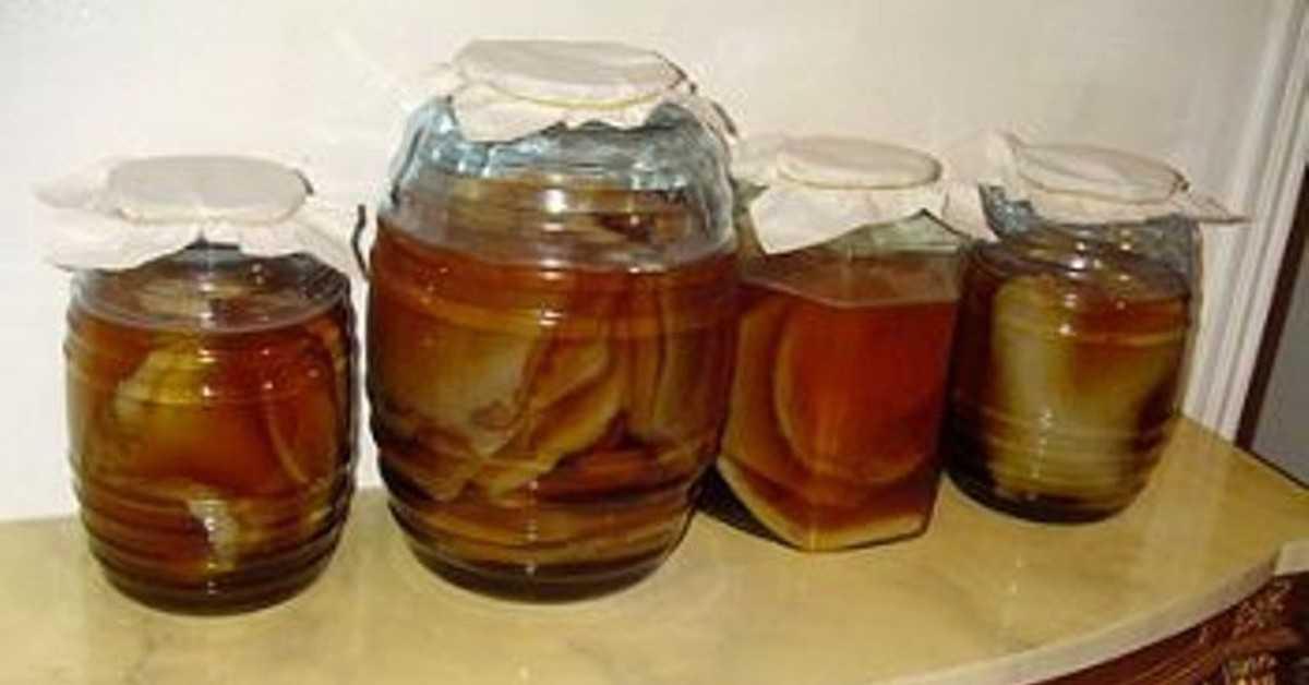 Как хранить чайный гриб