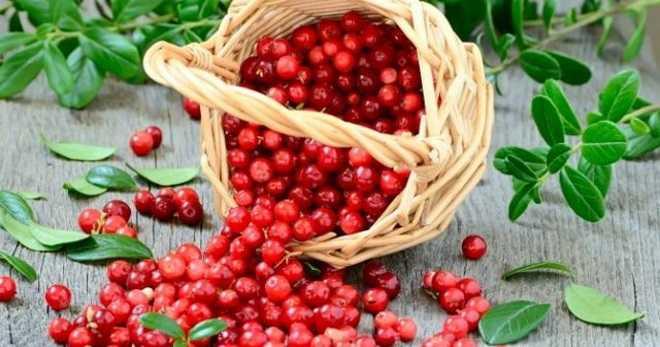 Сколько можно хранить замороженные ягоды в морозильной камере: сроки и правила