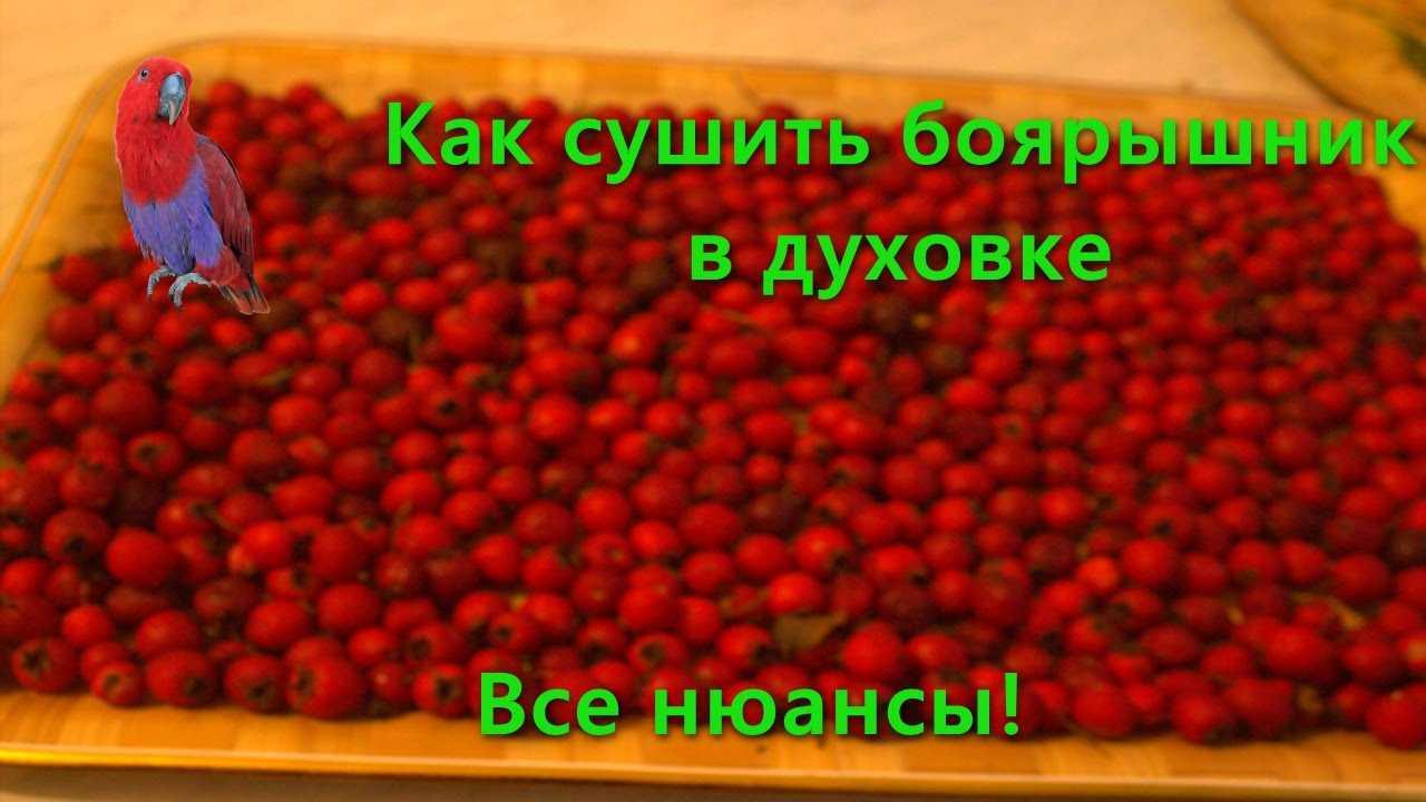 Как сушить ягоды боярышника в элеткросушилке —  пошаговая инструкция с фото