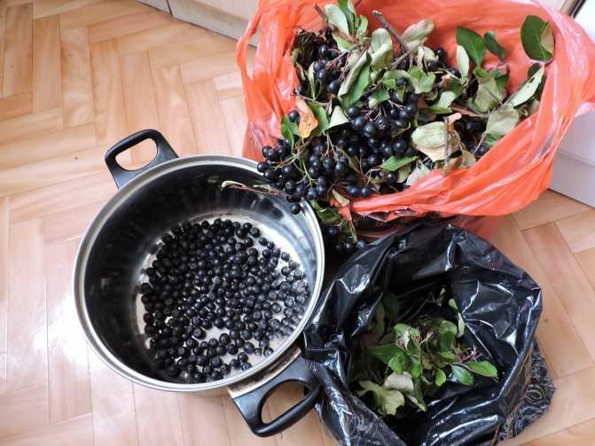Ликер из черноплодки с вишневыми листьями