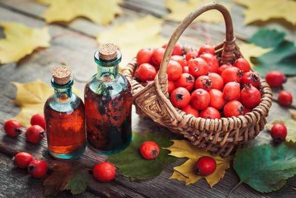 Боярышник ✔️ польза ✔️ лечебные свойства ✔️ описание ✔️ применение в медицине