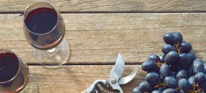 Домашнее вино из винограда изабелла: простые рецепты
