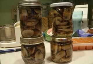 Соленые грузди на зиму в банках и в бочке - рецепты для черных, белых и сухих грибов